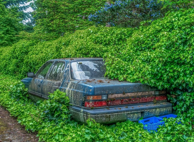 An abandoned vehicle overgrown with weeds
